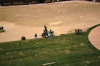 FIELD RE-SOD close3.JPG